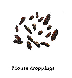 rat vs mouse droppings